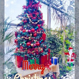 christmas tree with poinsettia hcg