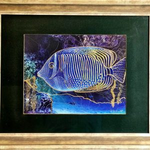 framed angelfish hcg