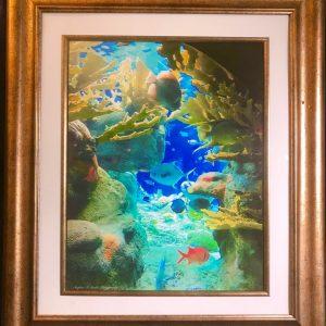 underwater scene hcg